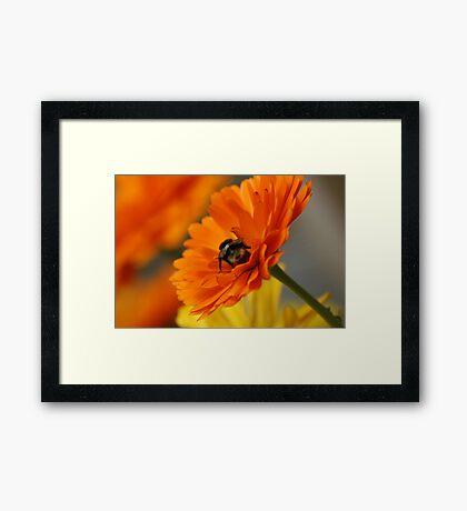 Orange Flame Framed Print