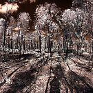 Burnt Forest regrowth by BigAndRed