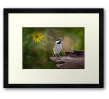 Carolina Chickadee in the Woods Framed Print