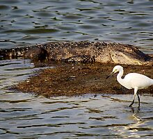 Gator and the Snowy Egret by Paulette1021