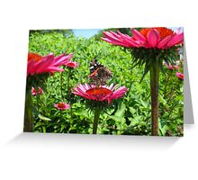 Monarch sighting Greeting Card