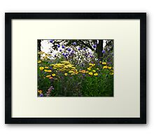 Colourful Flower Bed  Framed Print