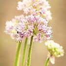 Flower in summer by Matthew Bonnington