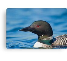 Portrait of a Loon  Canvas Print