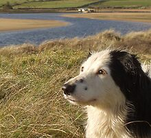Pet portrait - Culdaff - Dog and marram grass by Conor Donaghy