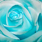 Ice Blue Rose by Pixie Copley LRPS