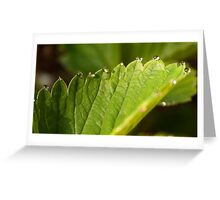strawberry leaves Greeting Card