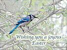 Joyous Easter Blue Jay Card by MotherNature