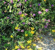 Purple and Yellow Wildflowers by rhamm