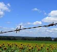 Barbed Wire Beauty by Debbie Robbins