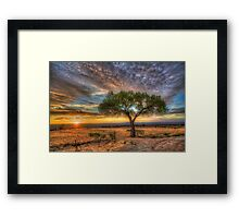 Tree at Sunset Framed Print