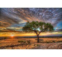 Tree at Sunset Photographic Print