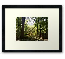 field through the trees Framed Print