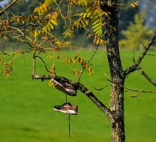Shoe Tree..............Devon UK by lynn carter