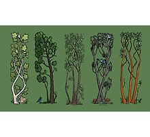 Five Trees/Green Photographic Print
