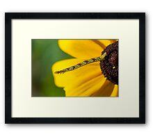 Inchworm Reaching out  Framed Print