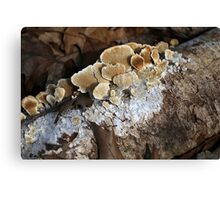 Forest Profiles 1 Canvas Print