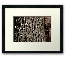 Forest Profiles 2 Framed Print