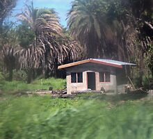 House from bus window, Fiji by J Forsyth