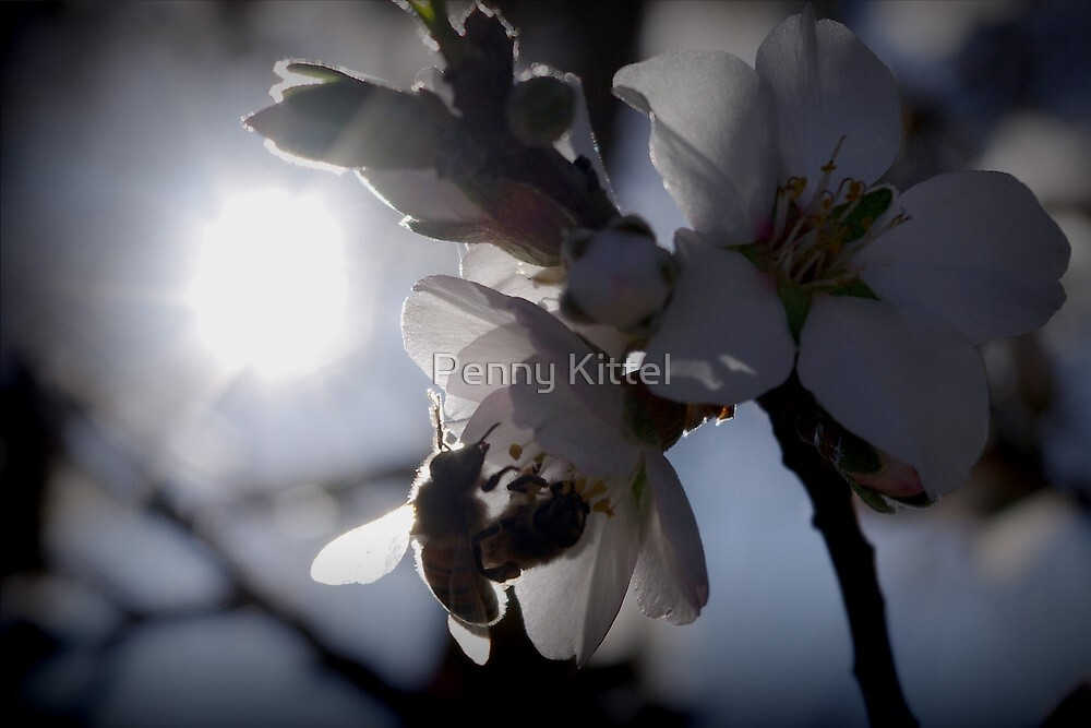 Bee-ginnings of spring by Penny Kittel