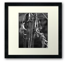 Hanging On BW Framed Print