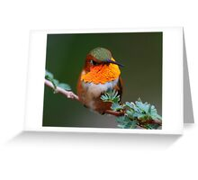 Male Rufous hummingbird enjoying a morning after a thunderstorm... Greeting Card