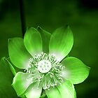 Green Lotus Flower, or Water Lily by Carole-Anne