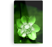 Green Lotus Flower, or Water Lily Metal Print