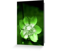 Green Lotus Flower, or Water Lily Greeting Card