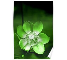 Green Lotus Flower, or Water Lily Poster