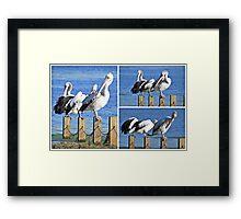 Aerobics ~ Oz-Pelican Style... Framed Print