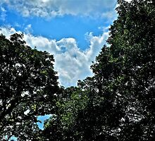 Eagle Cloud Between the Tree Tops  by Jack McCabe