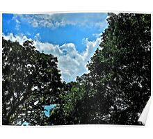 Eagle Cloud Between the Tree Tops  Poster