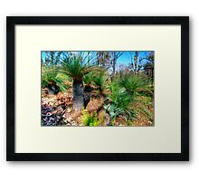 New growth on blackboys Framed Print