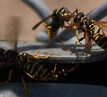 Wasp Meeting by Ian Sprague