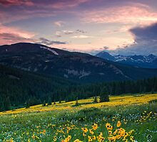 Alpine Sunflower Meadows by John  De Bord Photography