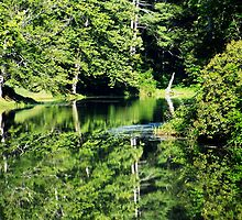 Reflecting Green by Mandi  Ruch