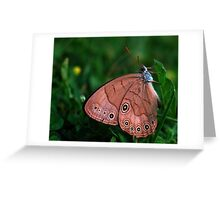 butterfly sleeping with eyes open Greeting Card