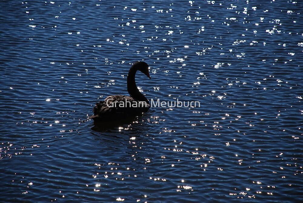 Swan Among the Stars by Graham Mewburn