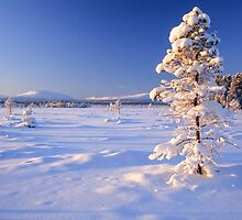 Snow covered trees in north Sweden by Ingvar Bjork Photography