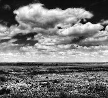 Endless Plains - Natural Reserve, Gainesville, FL by GabrielVPics