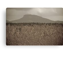 Grass tops at Coolum Queensland Australia Canvas Print