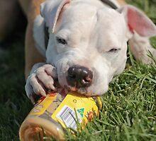 Must Reach Bottom Of The Jar....Mmmmm Love My Peanut Butter! by Zdogs
