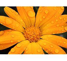 Calendual/Marigold 2 Photographic Print