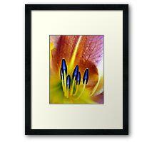 Lily Light... Framed Print