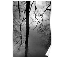Wetland Reflections 48 BW Poster