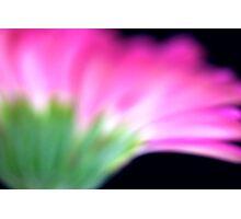 Pink Gerbera III Photographic Print