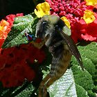 Leafcutter Bee by Susan Littlefield