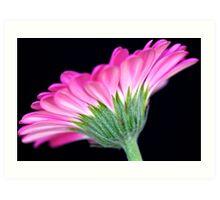 Pink Gerbera Art Print