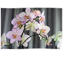 Orchids on Display Poster